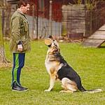Hundeschule - Apportieren