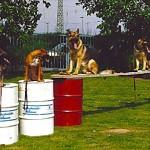 Hundeschule mit Tonnnen
