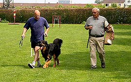 Ausbildung zum Begleithund - Hundeschule Heidelberg