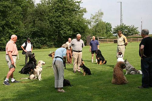 Sozialisierung von Junghunden und Welpen