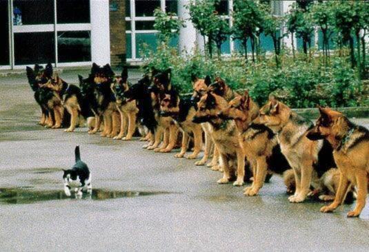 Hundedisziplin
